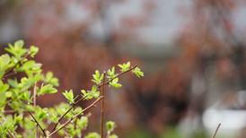 Plante Zoom (6).jpg
