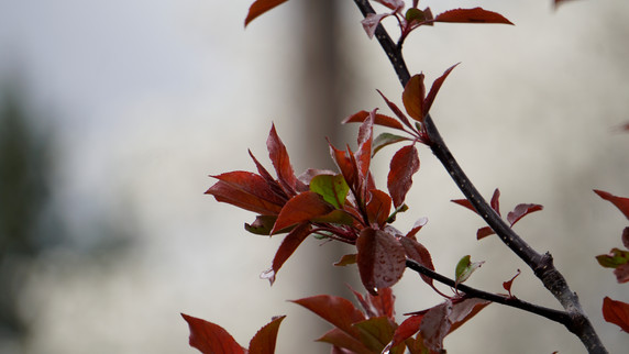Plante Zoom (9).jpg