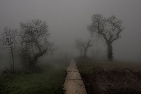 Туманная дорога  2 место шибалев компози