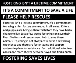 Fostering Saves Lives