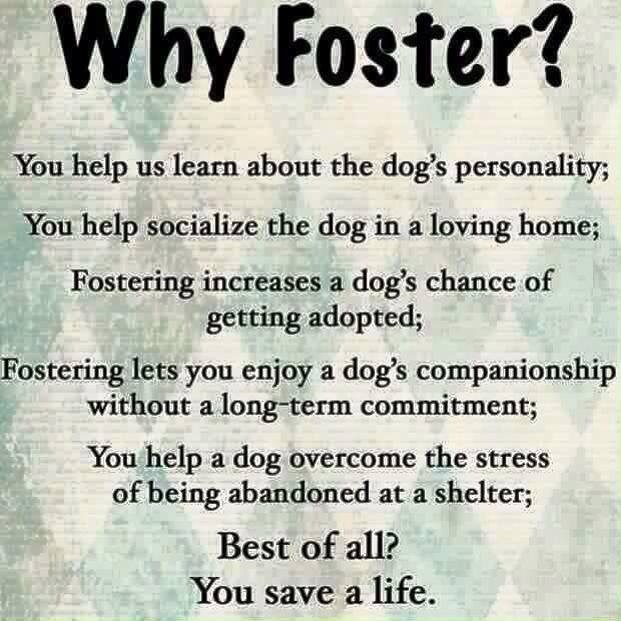 Why Foster??
