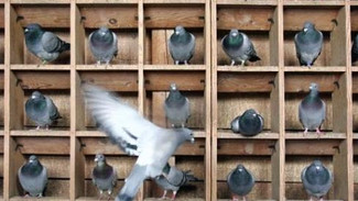 The 3-month terror of burning pigeonholes and knives: The mighty have fallen