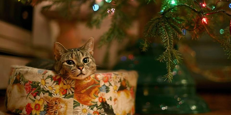 qmunicate Christmas Dinner & Social