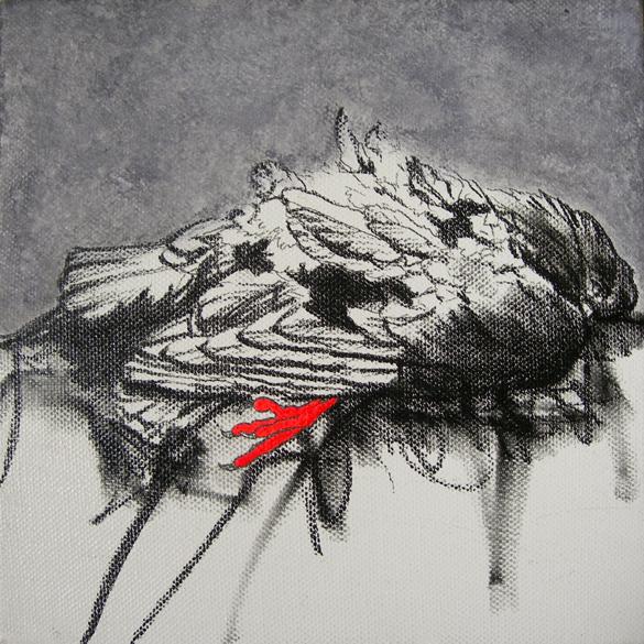 uccello morto