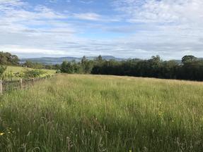 The Long Meadow