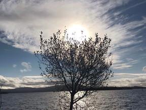 The November Tree (A winter reflection)