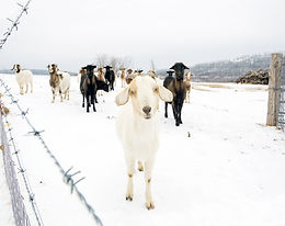 Over the Fenceline - Winter 2016