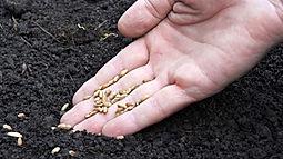 seeding.JPG
