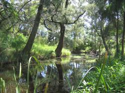 Mulgoa Creek
