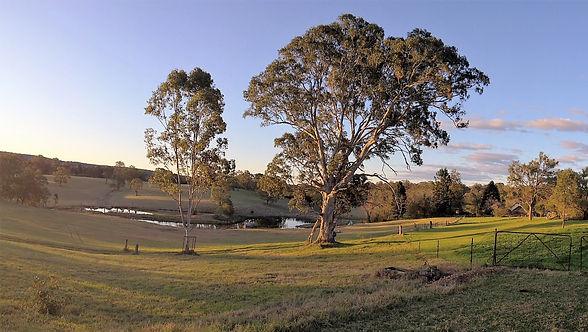 Mulgoa Valley, Gum Tree, Sunset. Mulgoa. Dam, Twilight