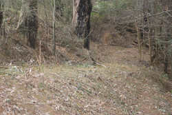Cox Track