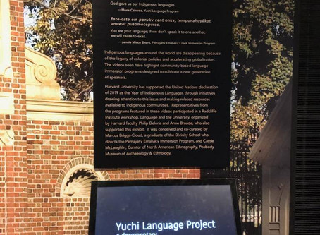 YLP featured at Peabody Museum, Cambridge MA