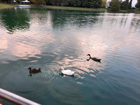 Laddove c'era il grano oggi ci sono il Lago La Sirenetta e il Green Village