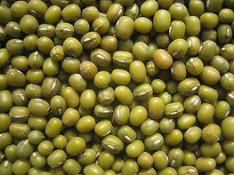 Mung Bean - Culinary