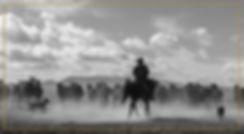 CowboyHorsesYellowBorder.jpg