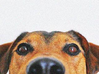 Waarom je die hondendrol altijd ruikt..