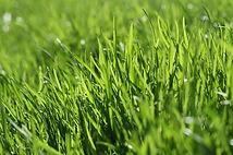 Fresh Grass aroma olie, geur