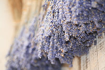 Lavender Linen aroma olie, geur