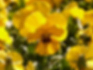 Spring Fresh aroma olie, lente geur