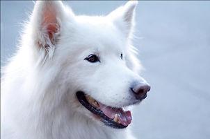 luchtreiniger huisdieren allergie, luchtreiniger kattenallergie