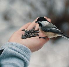 feed bird.jpg