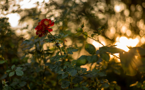 Rose Mother Center