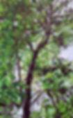 peeringupforwebsite.jpg