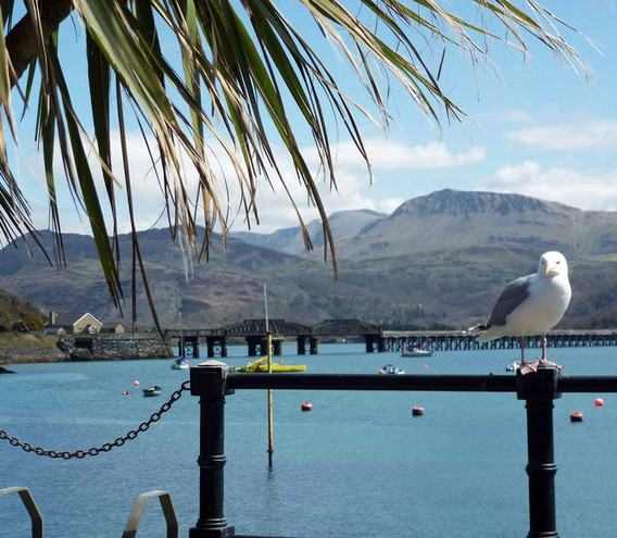 Barmouth bridge and seagull