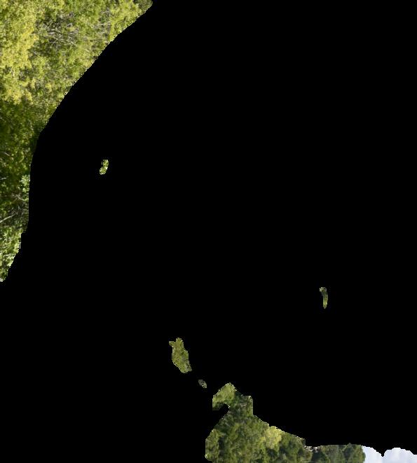 Hintergrund Tikal_klein.png