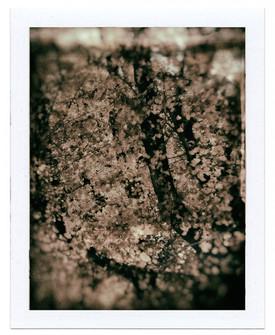 006 arbre.jpg