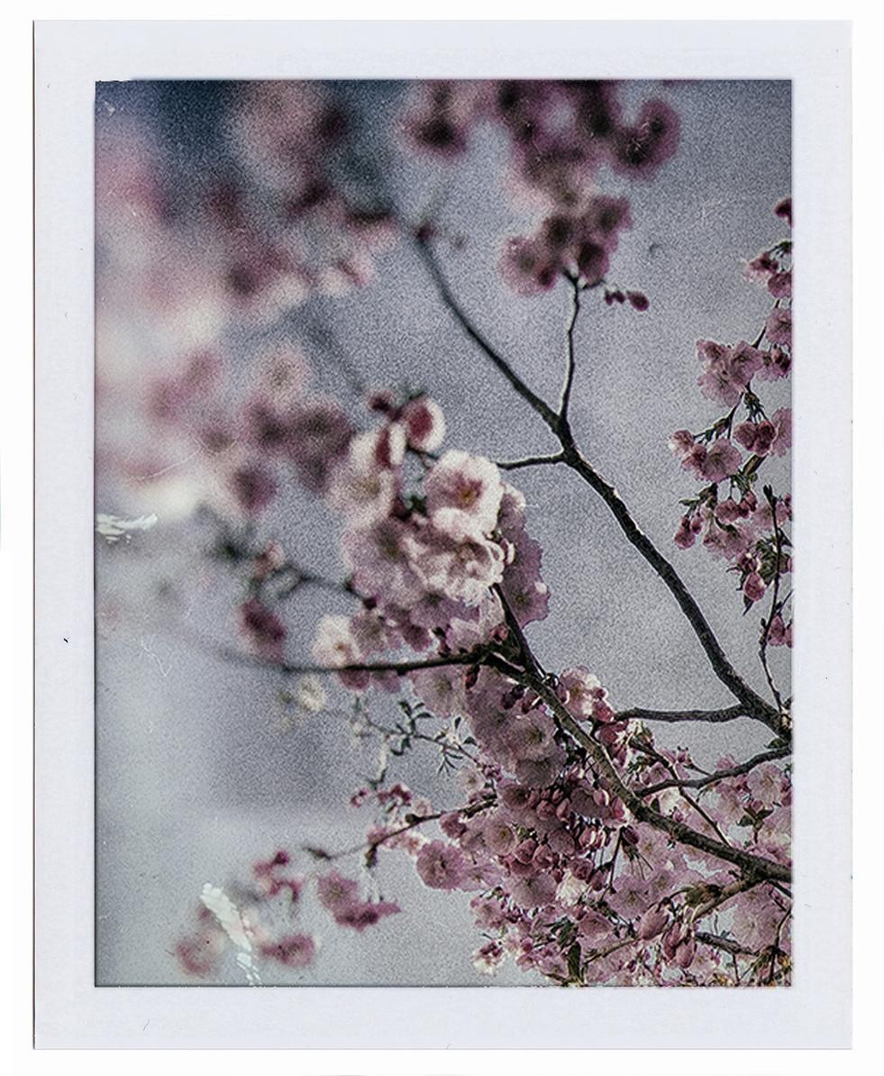 008 Japan 2.jpg