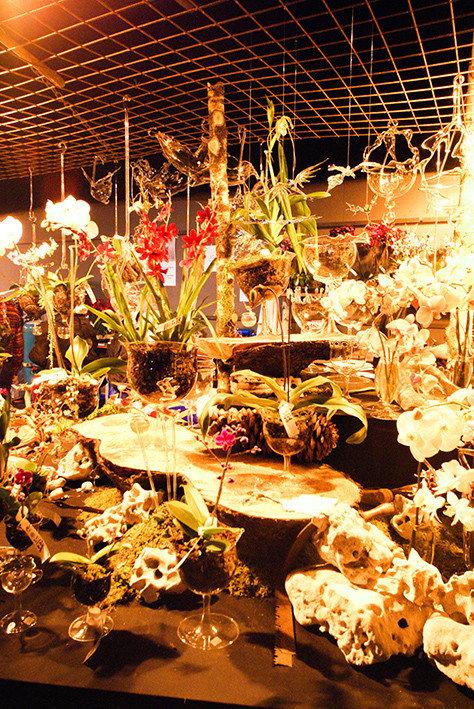 Orchideen Welt