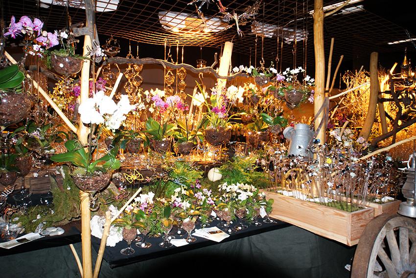 Orchideenausstellung Standansicht