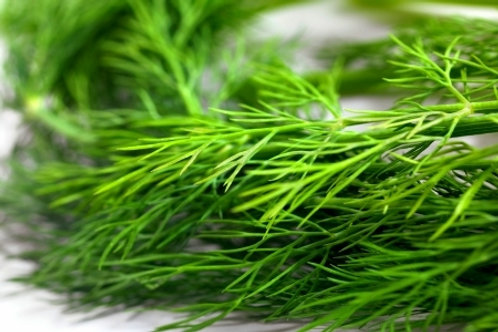 Dill Herb Bundle