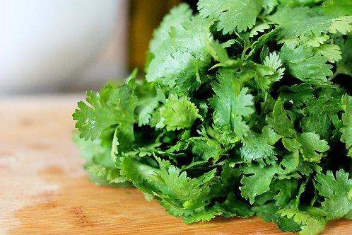 Cilantro Herb Bundle