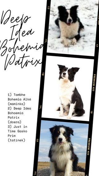 Deep Idea Bohemia Patrix (1).png