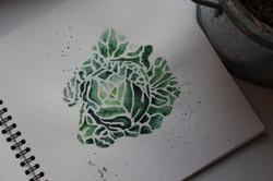 Cabbage Watercolor Angelina Dederer