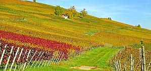 vineyard-2860941_1280.jpg