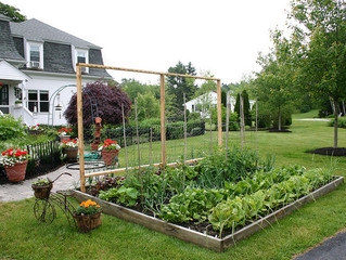 CREATING A YARD GARDEN: TURN YOUR GRASS INTO SUSTENANCE!