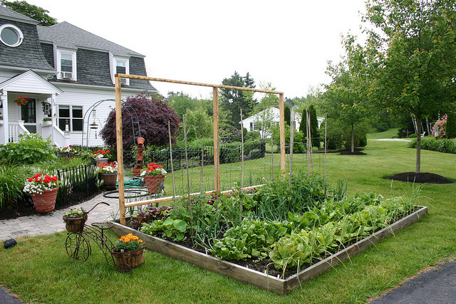 Ever heard of a yard garden? It's not a flower garden. It's a food garden that you plant right in your own front yard!