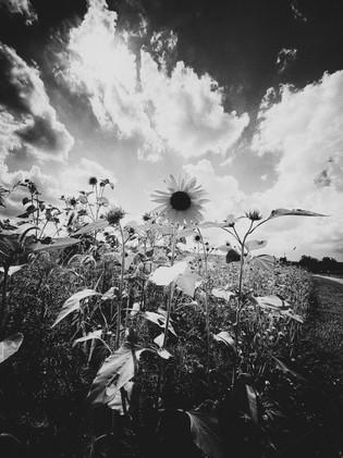Endless Summer Days 8x10_1