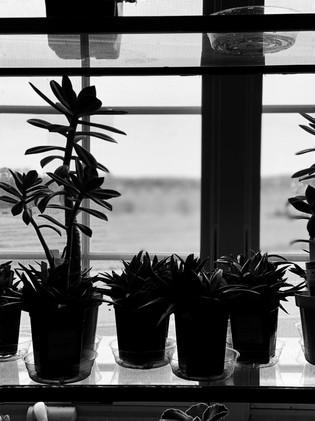 Plants I Can't Kill 5x7_1