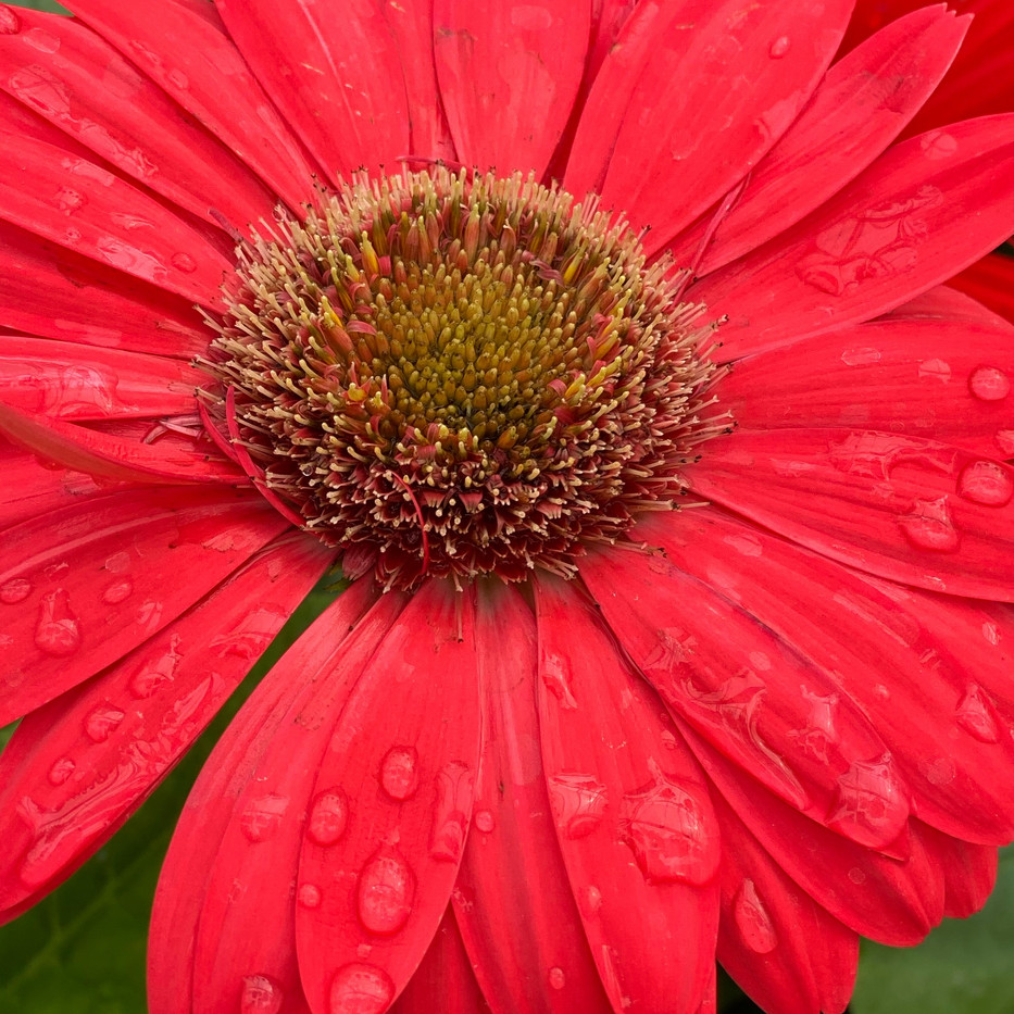 Happy Flower 8x8_1
