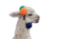 llama only EDITED.png