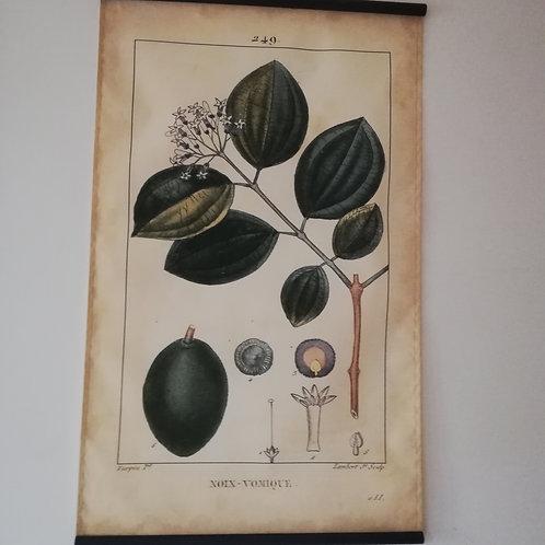 Affiche plantes (réédition)