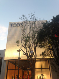 Tods MDD