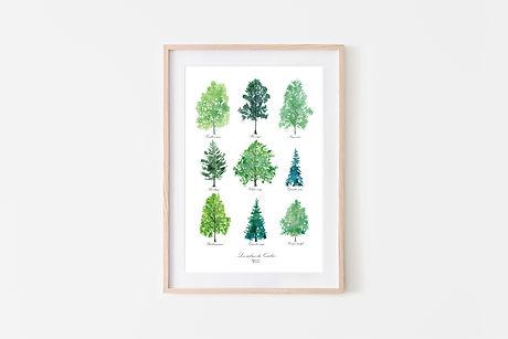 Les arbres du Québec.jpg