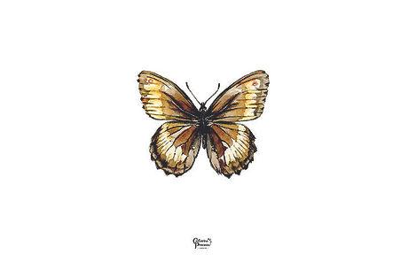 papillon brun.jpg