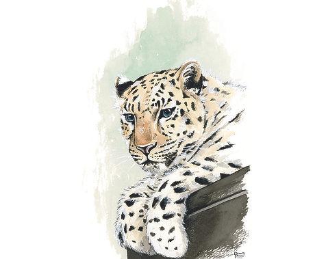 leopard045 - Copie plus lumière.jpg