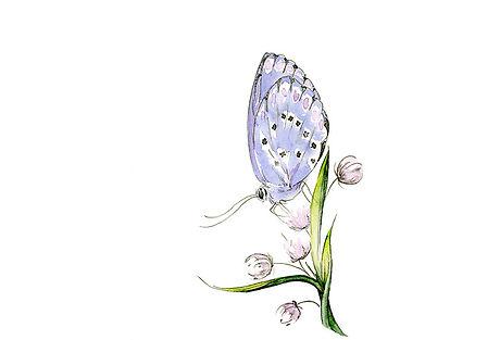 final papillon bleu.jpg